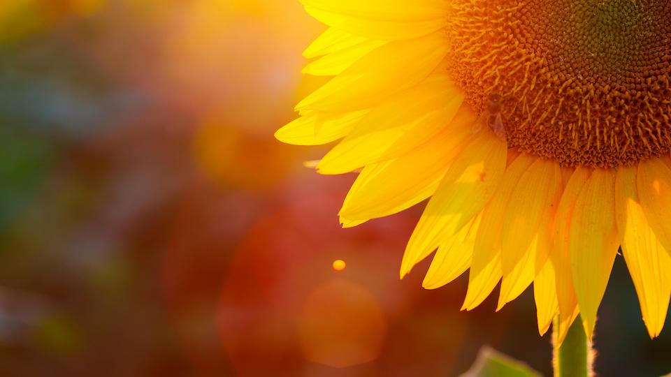 Energetischer Erlebnisabend: Bewusst und achtsam leben